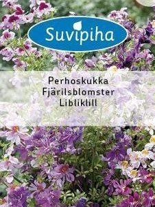 Suvipiha Schizanthus