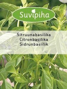 Suvipiha Sitruunabasilika