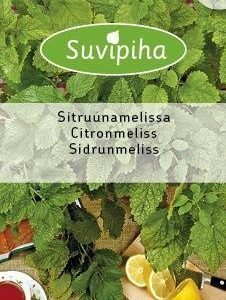 Suvipiha Sitruunamelissa