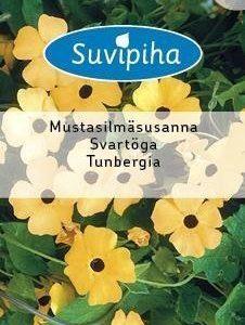 Suvipiha Thunbergia