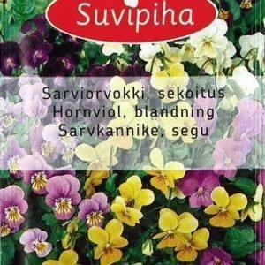 Suvipiha Viola