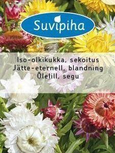 Suvipiha Xerochrysum